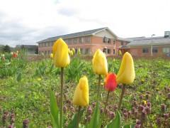四季を彩る草花2